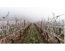 Mencegah Pembekuan pada Kebun Anggur dengan Weather Station